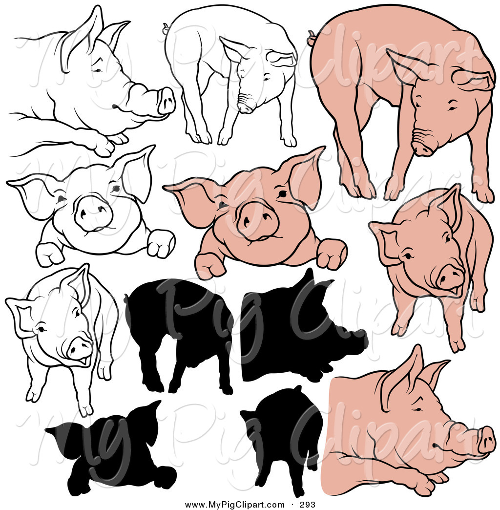 Pig Dog Cow Duck Black And White