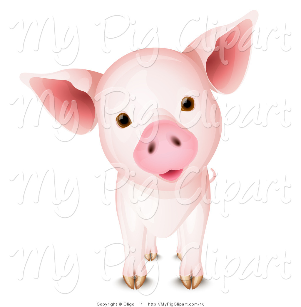 Pin Cute Baby Teacup Pigs On Pinterest
