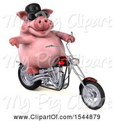 Swine Clipart of 3d Chubby Pig Riding a Chopper Motorcycle, on a White Background by Julos