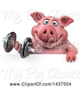 Swine Clipart of 3d Chubby Pig Working out with a Dumbbell, on a White Background by Julos