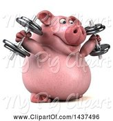 Swine Clipart of 3d Chubby Pig Working out with Dumbbells, on a White Background by Julos