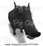 Swine Clipart of 3d Wild Black Boar Pig 2 by Ralf61