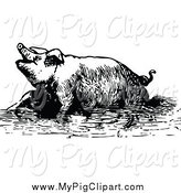 Swine Clipart of a Black and White Pig Soaking in Mud by Prawny Vintage