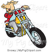 Swine Clipart of a Carefree Hog Riding a Yellow Chopper Right by Snowy