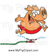 Swine Clipart of a Cartoon Happy Pig Running Through a Sprinkler by Toonaday