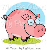 Swine Clipart of a Chubby Happy Farm Pig with Spots by Hit Toon