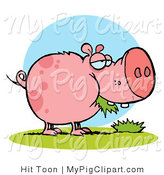 Swine Clipart of a Chubby Pink and Spotted Pig Snacking on Grass by Hit Toon
