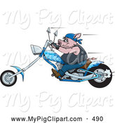 Swine Clipart of a Chubby Tough Hog Riding a Blue Chopper Motorcycle and Speeding past by Dennis Holmes Designs