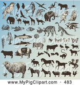 Swine Clipart of a Digital Collage of a Multitude of Animals and Animal Silhouettes on Blue by Anja Kaiser