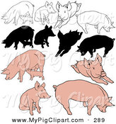 Swine Clipart of a Digital Collage of Pigs in Color, Outline Designs and Silhouettes by Dero