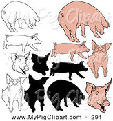 Swine Clipart of a Digital Set of Happy Pigs in Color, Outlines and Silhouettes by Dero