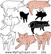 Swine Clipart of a Digital Set of Nine Pigs in Color, Outlines and Silhouettes by Dero