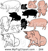 Swine Clipart of a Digital Set of Pigs in Color, Outlines and Silhouettes by Dero