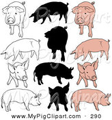 Swine Clipart of a Digital Set of Pigs in Color, Outlines and Silhouettes on White by Dero