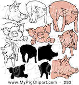 Swine Clipart of a Digital Set of Pigs in Color, Outlines and Silhouettes over White by Dero