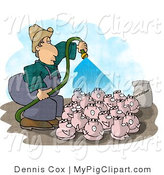 Swine Clipart of a Farmer Watering His Pigs with a Hose by Djart
