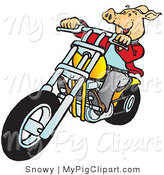 Swine Clipart of a Happy Hog Riding a Yellow Chopper to the Left by Snowy