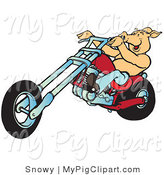 Swine Clipart of a Happy Shirtless Hog Riding a Red Chopper Lefy by Snowy