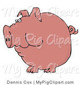Swine Clipart of a Plump Pink Pig with a Curly Tail Holding Food in His Cheeks by Djart