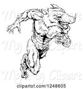 Swine Clipart of Black and White Muscular Aggressive Boar Mascot Running Upright by AtStockIllustration