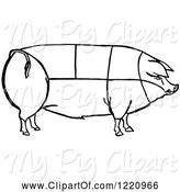 Swine Clipart of Black and White Pig Showing Cuts of Pork by Picsburg