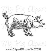 Swine Clipart of Black and White Sketched Pig in Profile by AtStockIllustration