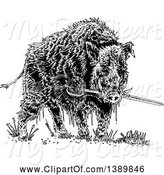 Swine Clipart of Black and White Wild Boar Pig Biting a Sword by Lineartestpilot