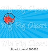 Swine Clipart of Cartoon Angry Red Pig and Blue Rays Background or Business Card Design by Patrimonio