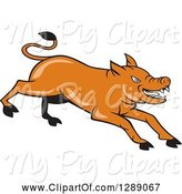 Swine Clipart of Cartoon Charging Angry Brown Pig by Patrimonio