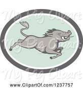Swine Clipart of Cartoon Gray Razorback Boar Leaping in a Gray and Pastel Green Oval by Patrimonio