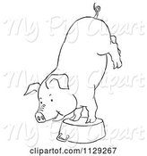 Swine Clipart of Cartoon Outlined Pig Doing a Handstand on a Pot by Picsburg