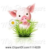 Swine Clipart of Cute Piglet with a Daisy in Grass by Oligo