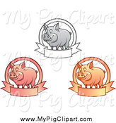 Swine Clipart of Grayscale Pink and Orange Happy Pigs with Banners by Vector Tradition SM