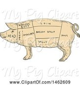Swine Clipart of Pig Profile Showing Cuts of Meat, in Drawing Sketch Style by Patrimonio