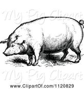 Swine Clipart of Retro Vintage Black and White Farm Pig by Prawny Vintage