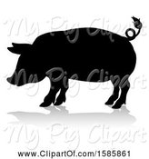 Swine Clipart of Silhouetted Pig, with a Reflection or Shadow, on a White Background by AtStockIllustration