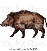Swine Clipart of Sketched Boar by Vector Tradition SM