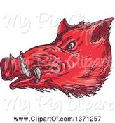 Swine Clipart of Sketched Red Wild Boar Head by Patrimonio