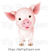 Vector Swine Clipart of a Cute Pig Tilting Its Head by Oligo