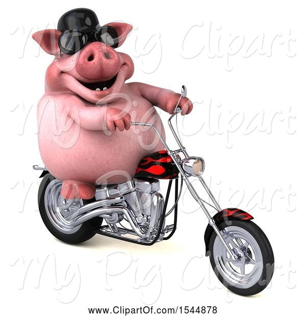 Swine Clipart of 3d Chubby Pig Riding a Chopper Motorcycle, on a White Background
