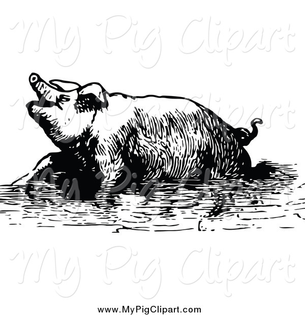 Swine Clipart of a Black and White Pig Soaking in Mud