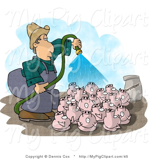 Swine Clipart of a Farmer Watering His Pigs with a Hose