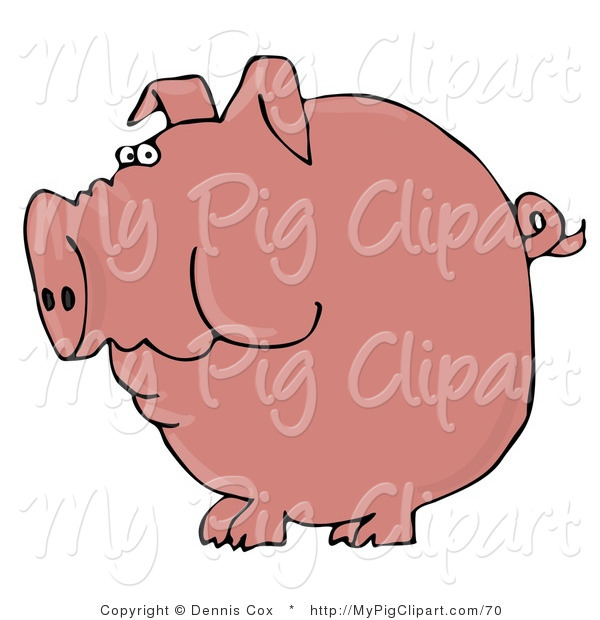 Swine Clipart of a Plump Pink Pig with a Curly Tail Holding Food in His Cheeks