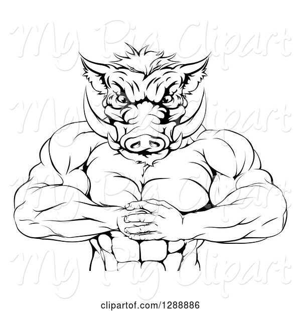 Swine Clipart of Black and White Muscular Aggressive Boar Guy Mascot Gesturing Bring It