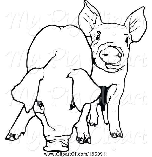 Swine Clipart of Black and White Pigs