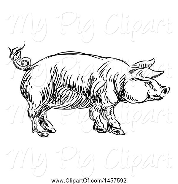 Swine Clipart of Black and White Sketched Pig in Profile