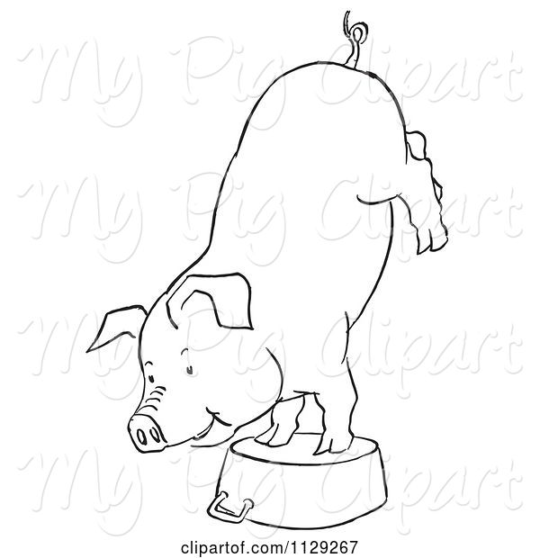 Swine Clipart of Cartoon Outlined Pig Doing a Handstand on a Pot