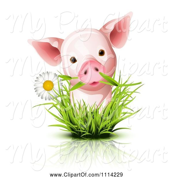 Swine Clipart of Cute Piglet with a Daisy in Grass