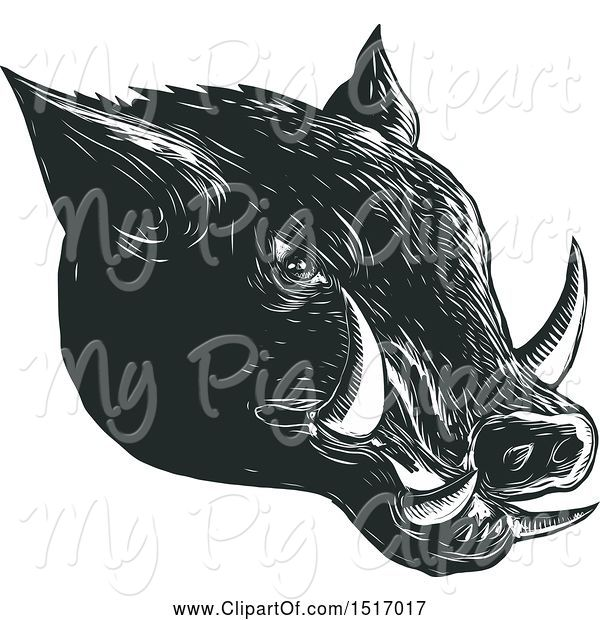 Swine Clipart of Razorback Boar Head, in Black and White Woodcut