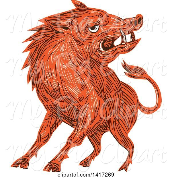 Swine Clipart of Sketched Angry Razorback Boar